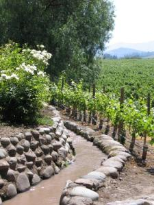 Carmenere Vineyards