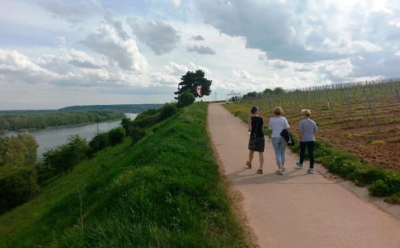 Hiking along, high above the Rhine.