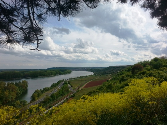 Overlooking the vineyards along the Rhine towards Nierstein. The yellow plants are rapeseed.