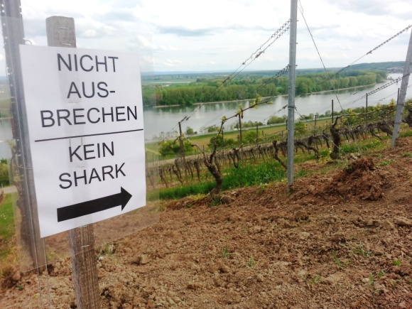 "We were relieved there was not a single ""shark"" in the vineyards (""kein"" means ""no"")."